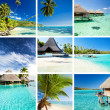 Stock Photo: Collage of tropical images from mooreand tahiti