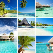 Collage of tropical images from moorea and tahiti — 图库照片