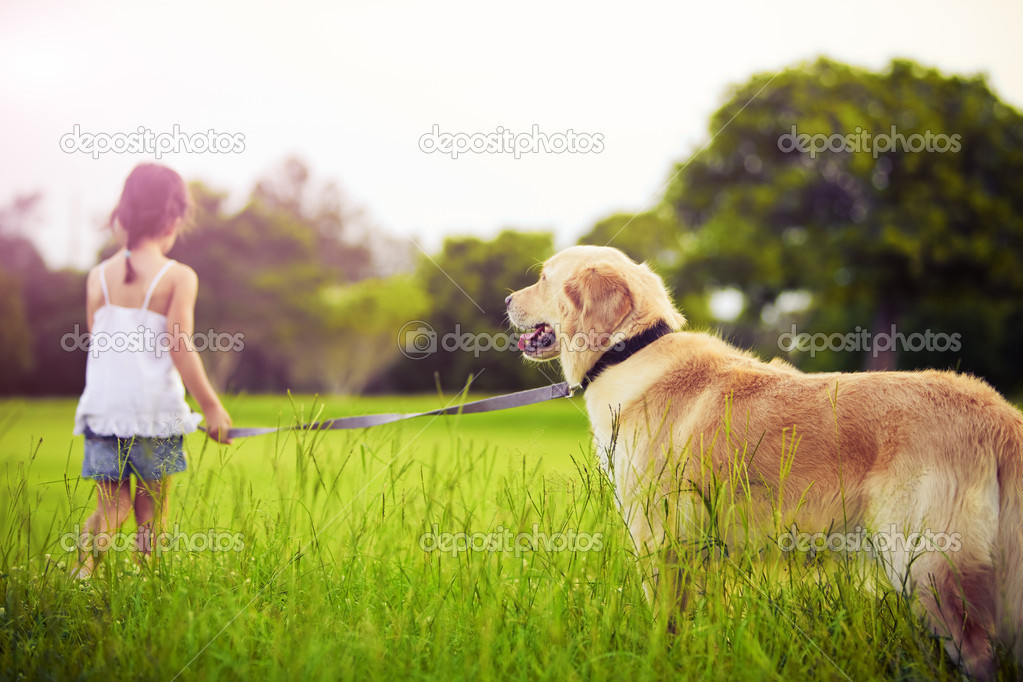 Young girl with golden retriever walking away into sun — Stok fotoğraf #4525865