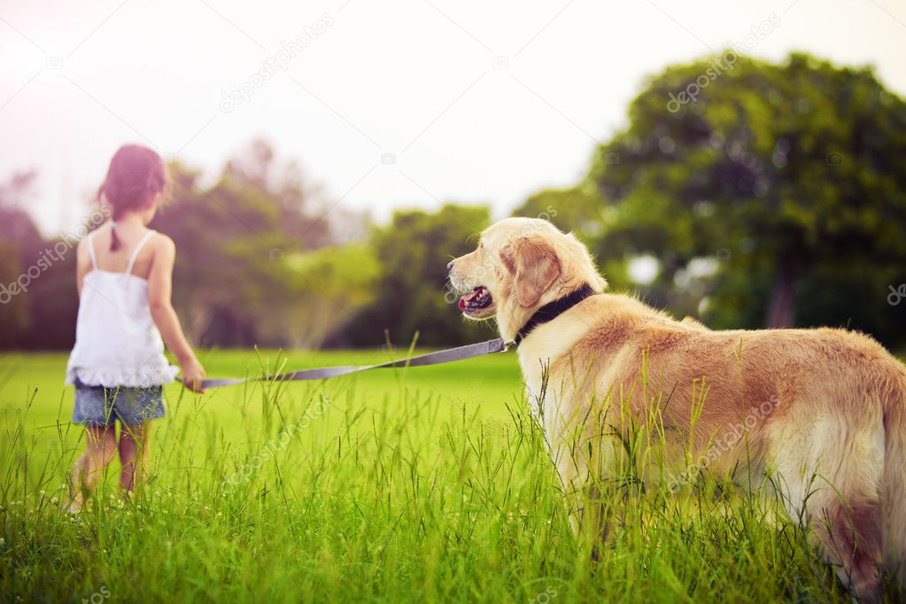 Young girl with golden retriever walking away into sun  Stockfoto #4525865