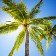 Close up of palm trees agains sunny sky - 图库照片