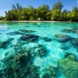 Underwater coral reef next to tropical island - Stock Photo