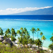 Palm trees on tropical beach in tahiti — Foto de Stock