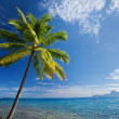 Single palm tree agains blue sky on beach — 图库照片