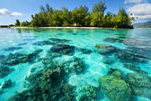 Underwater coral reef next to tropical island — Stock Photo