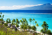 Palm trees on tropical beach in tahiti — Stock Photo