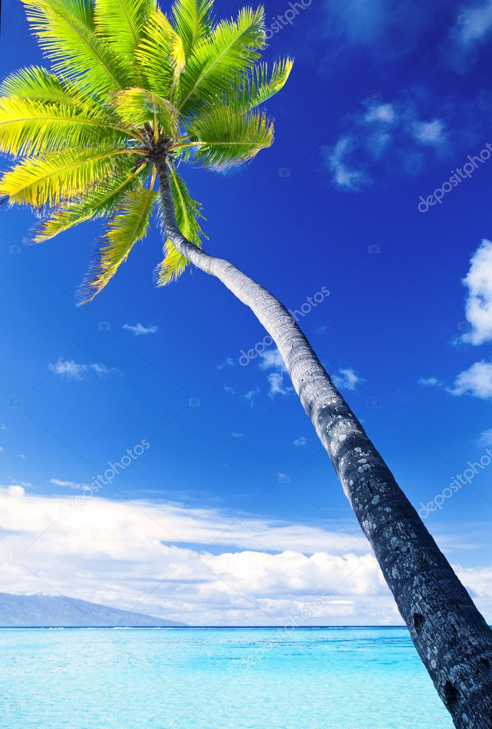 Palm tree hanging over stunning blue lagoon with blue sky  Stock Photo #4729036