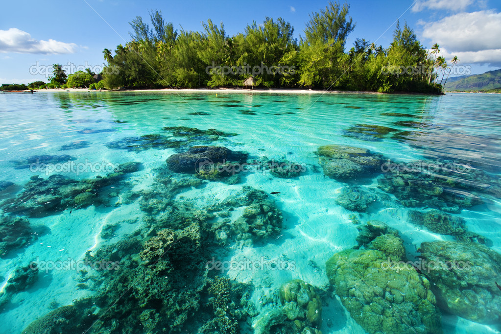 Underwater coral reef next to green tropical island — Stok fotoğraf #4729049