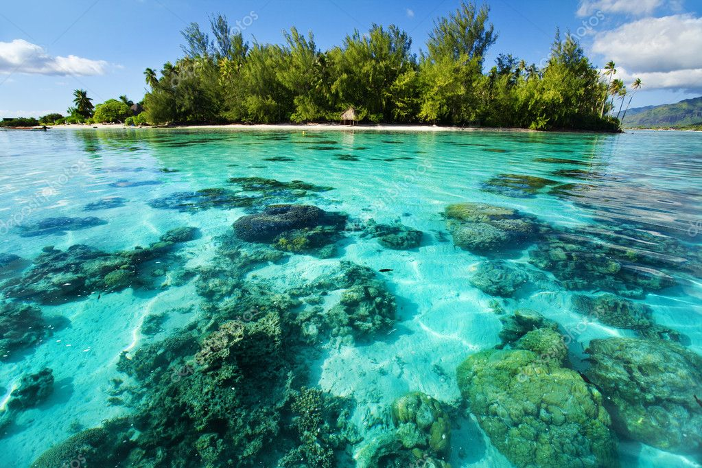 Underwater coral reef next to green tropical island — Stockfoto #4729049