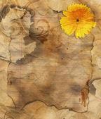 старая гранж сожжены бумаги — Стоковое фото