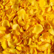 Royalty-Free Stock Photo: Yellow rose petals