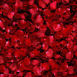 Background of red rose petals - 
