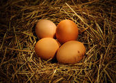 Chicken eggs — 图库照片