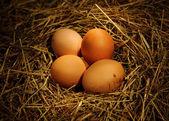 Huevos de gallina — Foto de Stock