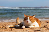 Cat on the beach — Stock Photo