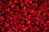 バラの花びらを赤の背景 — ストック写真