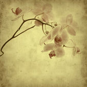 Textured old paper background with pink stripy phalaenopsis orch — Stock Photo