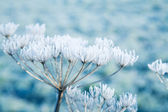 Hoarfrost on dead plants — Stock Photo