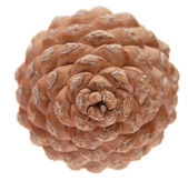 Pinus pinea (stone pine) cone, isolated, top view — Stock Photo