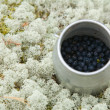 Small cylindrical container with freshly picked bilberries — 图库照片
