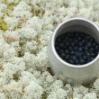 Foto de Stock  : Small cylindrical container with freshly picked bilberries