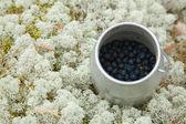 Liten cylindrisk behållare med nyplockade blåbär — Stockfoto