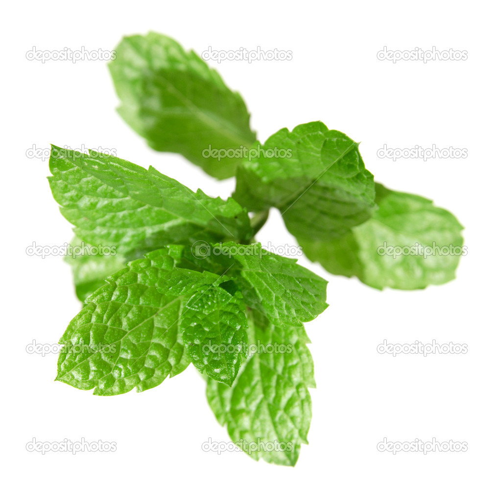 Bright green fresh mint branch, isolated on white  Stock Photo #4550956