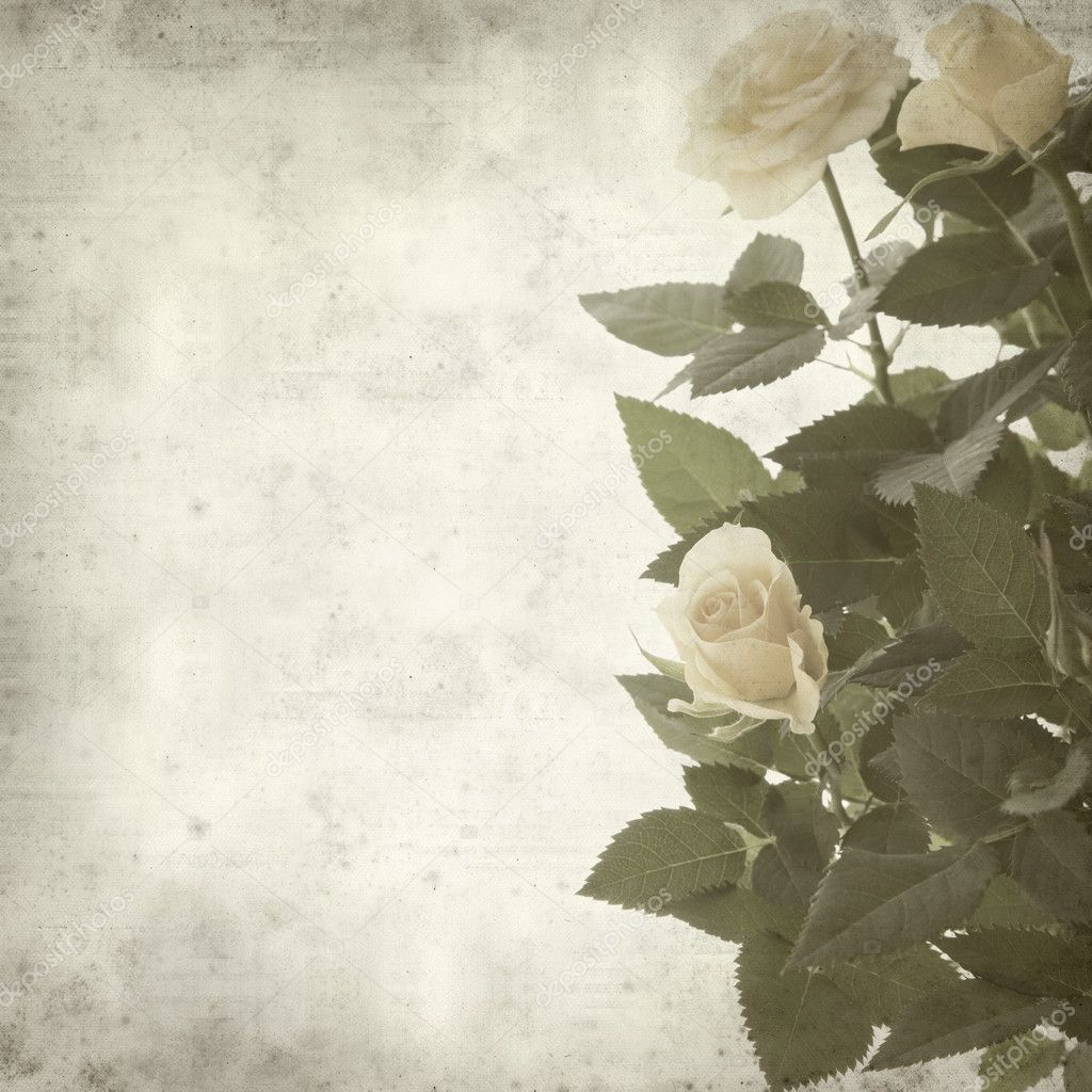 Textured old paper background with pale yellow rose  Stock Photo #4613641