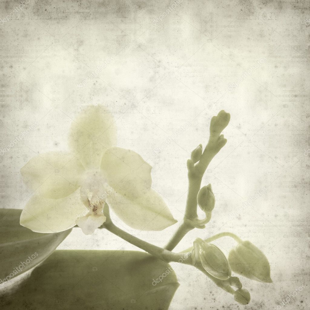 Textured old paper background with small yellow phalaenopsis orchid — Stock Photo #4621796