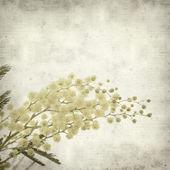 Teksturowane stary tło z fl okrągłe puszyste mimozy żółty — Zdjęcie stockowe