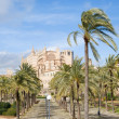 Palma de Mallorca;through palm-lined path towards the cathedral - Stock Photo
