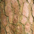 Royalty-Free Stock Photo: Pine tree bark background