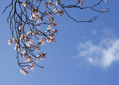 Bahar çiçekleri, mavi gökyüzü — Stok fotoğraf