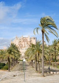 Palma de Mallorca;through palm-lined path towards the cathedral — Stock Photo