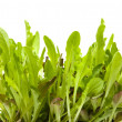Growing light green and purple leaves of babyleaf lettuce; isolated - Stock Photo
