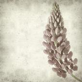 Getextureerde oud papier achtergrond met roze lupine bloem — Stockfoto