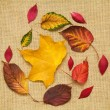 Autumn colorful leaves pattern on burlap fabric texture — Stock Photo
