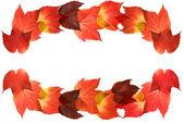 Beautiful colorful autumnal leaves of wild grape (Vitis); pieces arranged u — Stock Photo