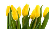 Bouquet of yellow tulips, isolated on white — Stock Photo