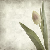 Textured old paper background with tulips — Stock Photo