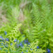 Spring background with unfurling fern leaf and bluebells out of — Stock Photo