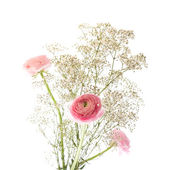 Simple bunch of Gypsophila (Baby's-breath) and pink Ranunculus (Persia — Stock Photo