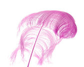 Natural ostrich feather dyed lilac, isolated on white background; — Stock Photo