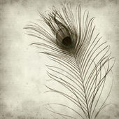 Textured old paper background with peacock feather — Stock Photo