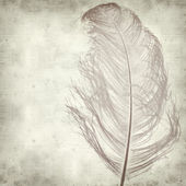 Textured old paper background with dyed ostrich feather — Stock Photo