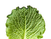 Savoy cabbage leaf isolated on white background; — Stock Photo