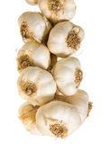 Plait of garlic bulbs close-up isolated on white background; — Stock Photo