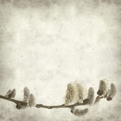 Textured old paper background with spring branch with catkins — Stock Photo
