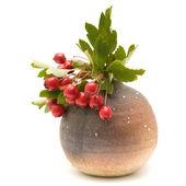 Hawthorn (Crataegus, thornapple) berries clusters in smalll round brown vas — Stock Photo