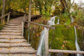 Wooden path along the stream in forest — Stock Photo